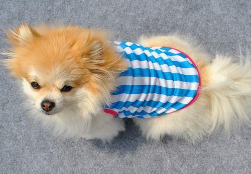 เสื้อผ้าสุนัขไซส์เล็ก น้องหมาน้องแมวขนาด 10 นิ้วเบอร์ XS เสื้อยืดคอกลมลายขวางสีฟ้า นำเข้า - พร้อมส่งDG1 ราคา89บาท
