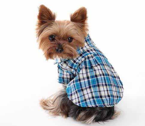 เสื้อผ้าสุนัขไซส์เล็ก น้องหมาน้องแมวขนาด 13 นิ้วเบอร์ S เสื้อเชิ้ตลายสก็อตสีฟ้า นำเข้า - พร้อมส่งDG3 ราคา89บาท