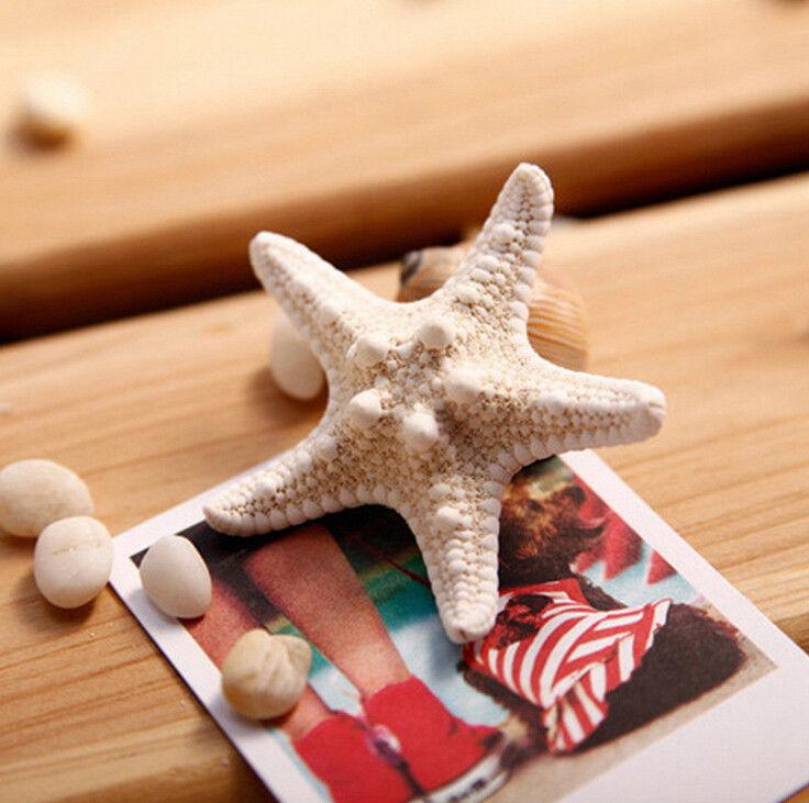 กิ๊บติดผม รูปปลาดาวสำหรับสาวรักท้องทะเลแฟชั่นเกาหลี นำเข้า - พร้อมส่งW067 ราคา150บาท