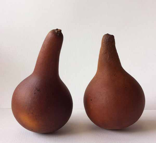 น้ำเต้าแห้ง 2pcs Natural Dried Gourds with Full Seeds for Crafts and Cultivate